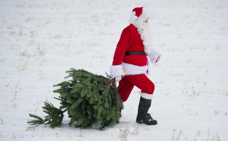 Более 300 постов для выявления елочных браконьеров планируют выставить на дорогах Беларуси в преддверии новогодних праздников.