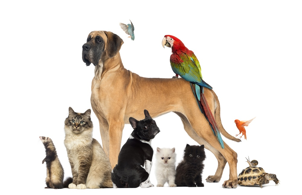 Animal group pictures