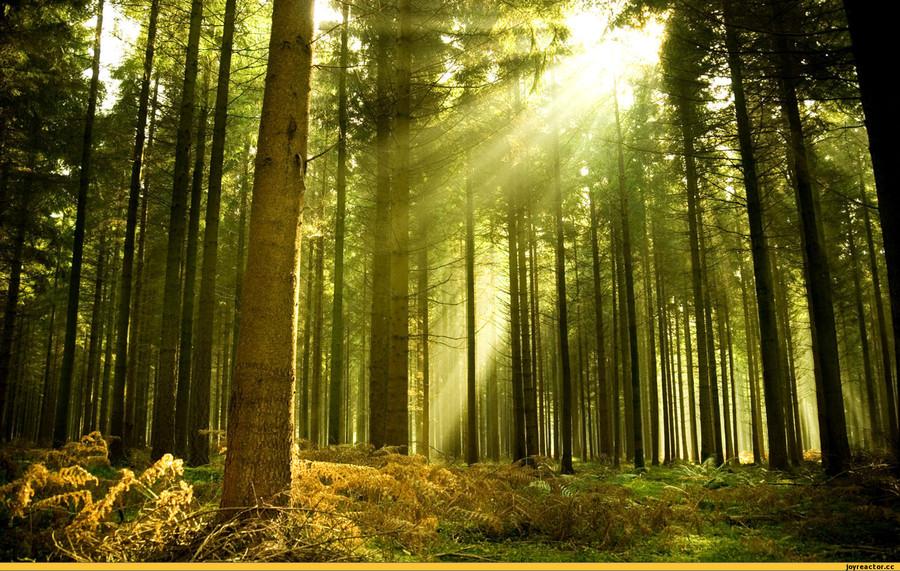 Фотка в лесу 11 фотография