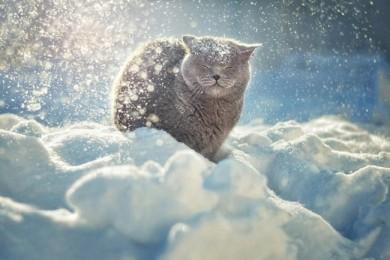 Картинки зима снег мороз новый год